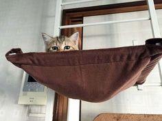 かなとこ雲ってなんだっけ? - http://iyaiyahajimeru.jp/cat/archives/61544