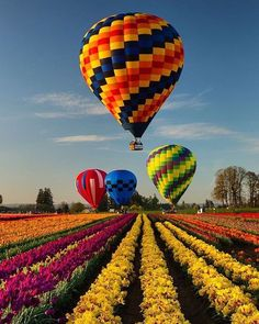 That flower farmer's not going to like the balloons ruining his flowers for market. Air Balloon Rides, Hot Air Balloons, Air Ballon, Photos Voyages, Paragliding, Nature Pictures, Belle Photo, Scenery, Places