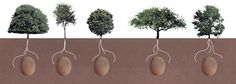 Each client will be able to choose their favorite tree