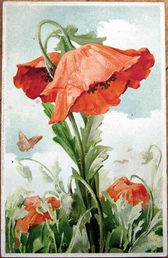 1905 Postcard: Art Nouveau Flower & Butterfly