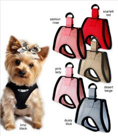 The BEST small dog choke-free step-in harness! We've used ours for almost 1 full year now. Yorkie Clothes, Pet Clothes, Best Small Dogs, Small Dog Clothes, Dog Clothes Patterns, Dog Items, Dog Jacket, Free Dogs, Dog Dresses