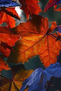 ~~Colours of the autumn ~
