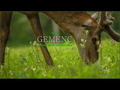 Egy év Gemenc (amatőr táj -és termeszetfilm) [Short landscape with nature film] Nature Film, Landscape, Animals, Scenery, Animales, Animaux, Animal, Animais, Corner Landscaping