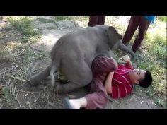 Elephant Gif, Elephant Love, African Elephant, Elephant Shower, Baby Animals, Cute Animals, Baby Elephants, Giraffes, Best Hug