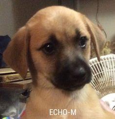 Echo's Photo
