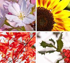 Ein schöner Garten benötigt viel Pflege: Blumen, Gemüse und Obst müssen zum richtigen Zeitpunkt gesät, gepflanzt und geerntet werden. So hat auch alles andere, wie das Schneiden der Hecke und das Mähen des Rasens, seine Zeit. Wir haben die Gartenaktivitäten in einem Kalender für Sie zusammengefasst. http://www.fuersie.de/diy/garten/artikel/die-richtige-pflege-der-gartenkalender