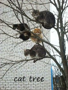 A CAT TREE  .. LOL