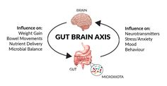 The Gut-brain-axis: How Digestive Health Influences Your Emotions In reality, digestion is becoming increasingly recognized as the epicenter of health. It is where the external environment and our internal biology interact. Gut Health, Mental Health, Brain Health, Sleep Deprivation Effects, Neurological System, Gut Brain, School Essentials, Neurotransmitters, Bad Mood