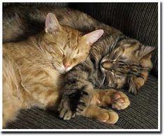 Animal Wellness - energy work with animals.