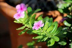 Guia de jardin. Blog de jardinería y plantas. Jardín en casa.: Flores en…