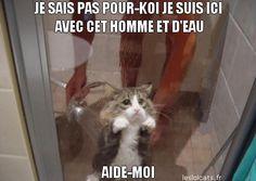 chat drole lolcat francais petit chat caption