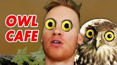Bizarre Owl Cafe in Tokyo