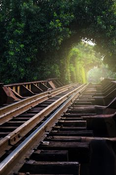 Nature tunnel with railway - Nature tunnel with railway in Thailand.