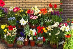 Online Garden Store for Quality Plants and Planters Spring Blooms, Spring Flowers, Planting Bulbs, Planting Flowers, Flower Planters, Flower Pots, Bloom Blossom, Outdoor Flowers, Patio Plants