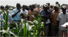Let's Talk Agric · Developing Agriculture Through Technology