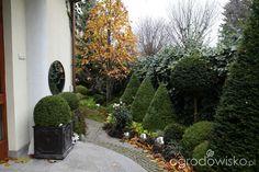 Ogród nie tylko bukszpanowy - część III - strona 801 - Forum ogrodnicze - Ogrodowisko