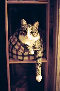 Pretty kitty! =^..^= .