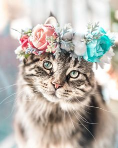 Flower Crown Cat Dog - This Artist Is Making Flower Crowns For Animals And They Look Majestic Informationen über Katzen - Cute Cats And Kittens, I Love Cats, Crazy Cats, Kittens Cutest, Fluffy Kittens, Cute Baby Animals, Animals And Pets, Funny Animals, Wild Animals