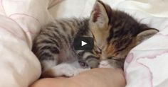 Itty Bitty Kittens Sleeping in Hands 'Compilation'!