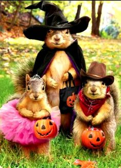Don't forget to put out some treats for our little friends tonight!