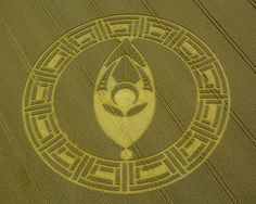 This beautiful crop circle just appeard August 23rd, 2013 in Cooks Plantation, near Beckhampton, Wiltshire, United Kingdom.