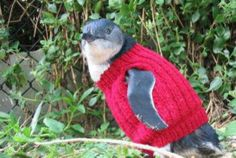 Knitters, put down your needles. Sweaters are not currently required for oil-slicked Australian penguins.