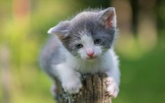 kitty (19) by Vlado Ferencic on 500px