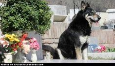 Loyal Dog Stays By Owner's Grave For Six Years