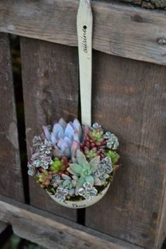 Spoon full of Succulents