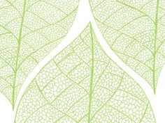 This leaf pattern would look great on a postcard and business card.  #design #business