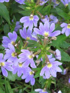eine lila Schönheit, entdeckt auf dem #BUGA-Gelände #Premnitz