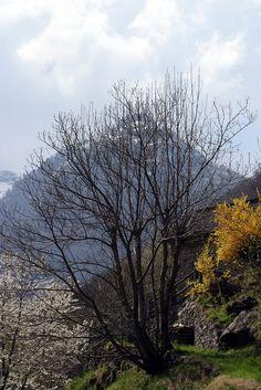 https://flic.kr/p/Hm3sDJ   Valle di Maggia, Ticino, Svizzera