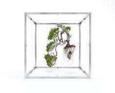 "Very cool, ""uprooted Bonzi"" art...nature *is* art!"