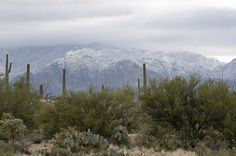Catalina Mountains AZ--home sweet home