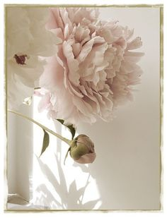 Peony Photograph Vintage Inspired, Shabby Chic Wall Art, Pale Pink and Sepia, French Country Home. $17.00, via Etsy.