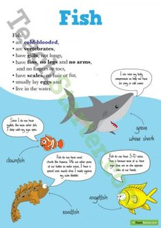 Animal Classifications Poster – Fish