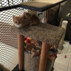 """cat library - employees can """"check out"""" a kitty for an hour and bring back to their desk. Improves shelter kitties' human interaction, improves employees moods, and increases adoption rates (clients see adorable cats)."""