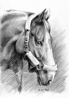 Koń rysunek ołówek