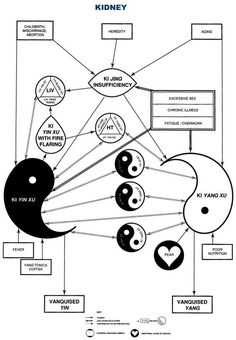 Acupuncture.com.au - Education - The Zang Fu - Kidney Pathology Flowchart