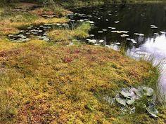 OpenIdeat: 5.-6. luokka: Metsä Country Roads, Earth, Mother Goddess, World, The World