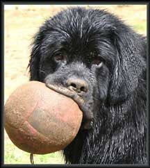 forget tennis balls. i play fetch with a volleyball.