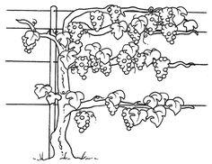 Midisegni.it - Disegni da colorare per bambini Leaf Coloring, Adult Coloring, Coloring Books, Coloring Pages, Wine Gadgets, True Vine, Wine And Canvas, Vides, Bible Crafts