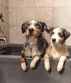 Aussie Bath time!