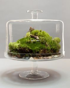 Recycle that cake plate into a terrarium, add miniatures for extra drama! #diy #terrarium #cakeplate