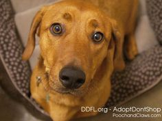 A HOME FOR THE HOLIDAYS: DECEMBER ADOPTION SPECIALS AT THE DUMB FRIENDS LEAGUE DENVER (Dec. 9, 2014) There's no place like a home for the holidays, which i