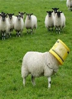 """One of The Ewe's in The Background:  """"I do believe that 'Ewe'-Ann is working on her Bucket List!"""""""