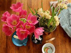 Tulips : Posie gets Cozy