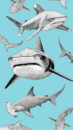 Shark art collage formatted for iPhone background Shark Wallpaper Iphone, Cute Wallpaper Backgrounds, Animal Wallpaper, Aesthetic Iphone Wallpaper, Phone Backgrounds, Cool Wallpaper, Pattern Wallpaper, Cute Wallpapers, Aesthetic Wallpapers