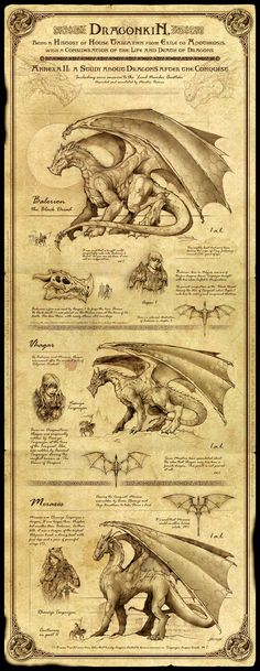 Dragonkin I by *Feliche on deviantART | a sweet encyclopedia-like description of the legendary dragons of Aegon.: