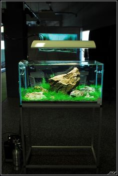 Layout by Orchid. #aquascaping